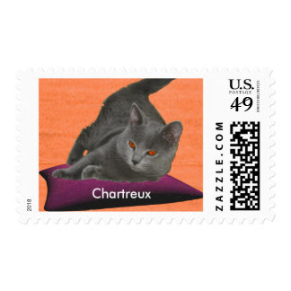 Chartreux Kitten Postage