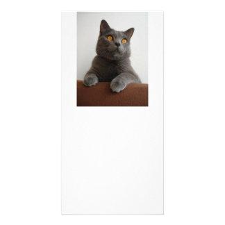 Chartreux peeking card