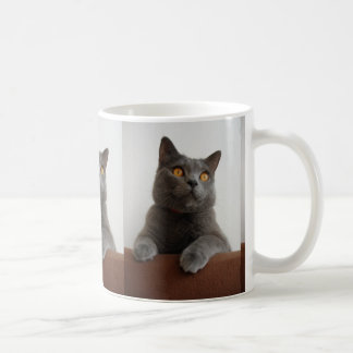 Chartreux peeking coffee mug