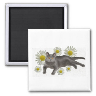 Chartreux  w/daisies Magnet
