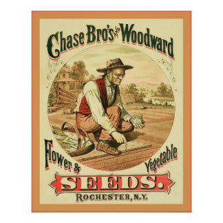 Chas Bros and Woodward ~ Vintage Advertising Print