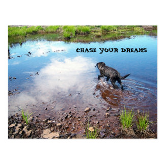 Chase Your Dreams Postcard