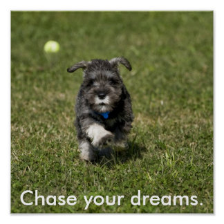 Chase your dreams. poster