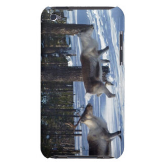 Chasing Reindeers Ipod Case