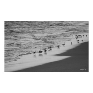Chasing Sandpipers Poster