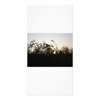 Chasing Shadows - photocard Card
