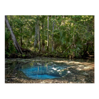 Chassahowitzka Springs, Florida. Post Cards