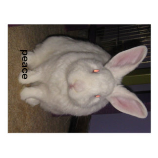 chasse the peace bunny postcard
