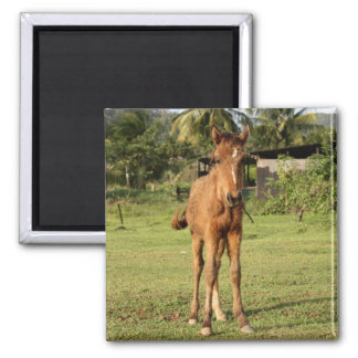 Chastanet1 2 Inch Square Magnet