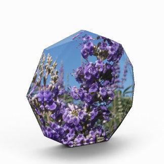 Chaste Tree Purple Flowers Award