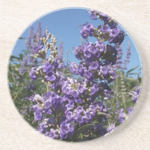 Chaste Tree Purple Flowers Drink Coasters