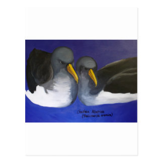 Chatham Albatross (Thalassarche eremita) Postcard