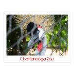 Chattanooga Zoo Postcards