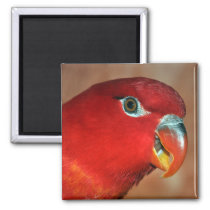 Chattering lory magnet