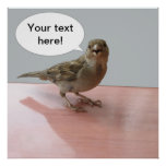 Chattering Sparrow poster