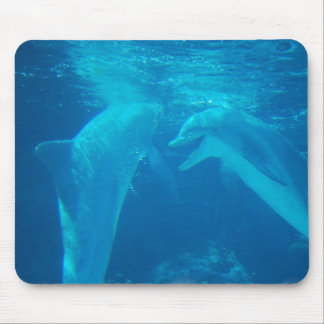 Chatting Dolphin Pair Mouse Pad
