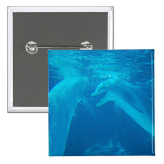 Chatting Dolphin Pair Pin