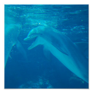 Chatting Dolphin Pair Poster