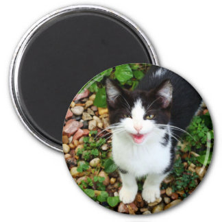 Chatty Catty Magnet