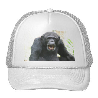Chatty Chimp Baseball Hat