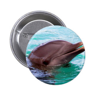 Chatty Dolphin Button