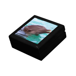 Chatty Dolphin Jewelry Box