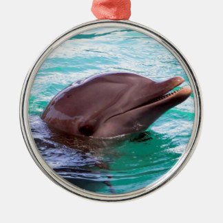 Chatty Dolphin Ornament