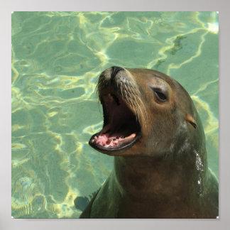 Chatty Sea Lion Poster