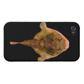 Chaunax Stigmaeus Fish iPhone 4 Case