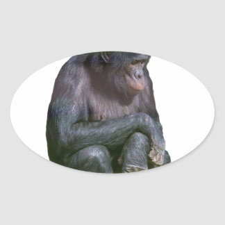 Cheap as chimps oval sticker