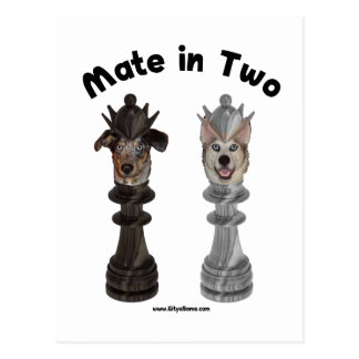 Check Mate in Two Dogs Postcard