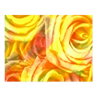 checkered roses yellow postcard