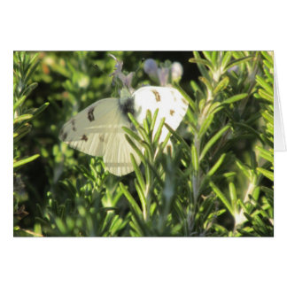 Checkered White Butterfly Card