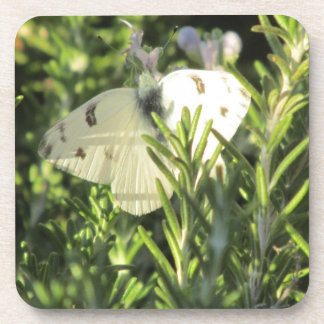 Checkered White Butterfly Coasters