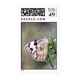 Checkered White Moth Postage Stamp