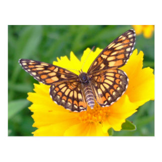 Checkerspot butterfly postcard
