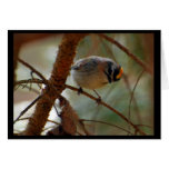 Checking In - Bird Note Card (blank)