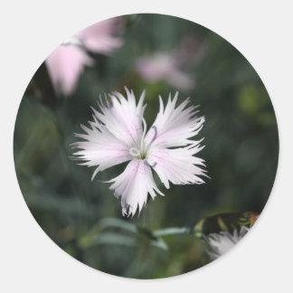 Cheddar pink (Dianthus gratianopolitanus) Classic Round Sticker