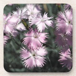 Cheddar pink (Dianthus gratianopolitanus) Drink Coaster