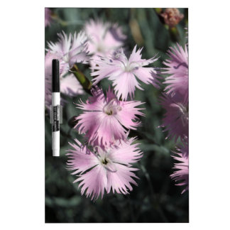 Cheddar pink (Dianthus gratianopolitanus) Dry-Erase Board