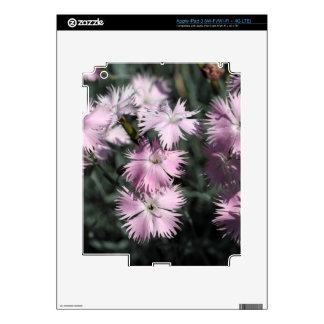 Cheddar pink (Dianthus gratianopolitanus) iPad 3 Decal