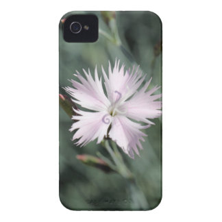 Cheddar pink (Dianthus gratianopolitanus) iPhone 4 Case