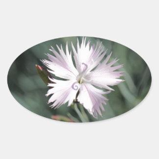 Cheddar pink (Dianthus gratianopolitanus) Oval Sticker