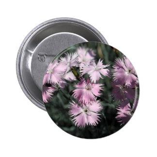 Cheddar pink (Dianthus gratianopolitanus) Pinback Button