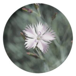 Cheddar pink (Dianthus gratianopolitanus) Plate