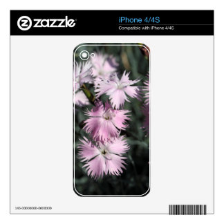Cheddar pink (Dianthus gratianopolitanus) Skins For iPhone 4