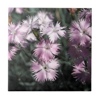 Cheddar pink (Dianthus gratianopolitanus) Tile