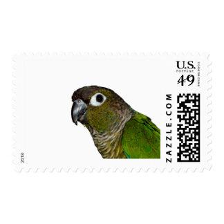 Cheeked verde Conure Sellos Postales