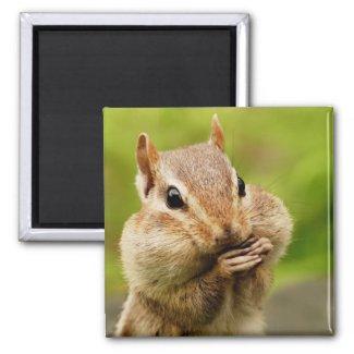 Cheeky Chipmunk Magnet magnet
