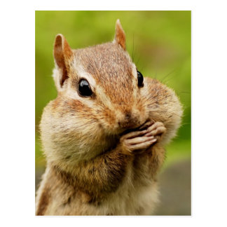 Cheeky Chipmunk Postcard